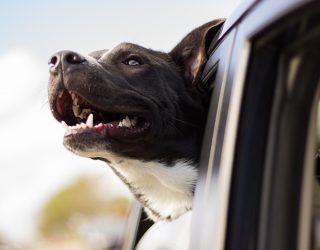 Najlepszy przyjaciel kierowcy : Życie psa w trasie