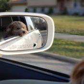 4 korzyści z posiadania swojego zwierzaka w drodze